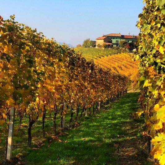 #bric, #sorì, #vineyards, #hills, #wine, #Bussia