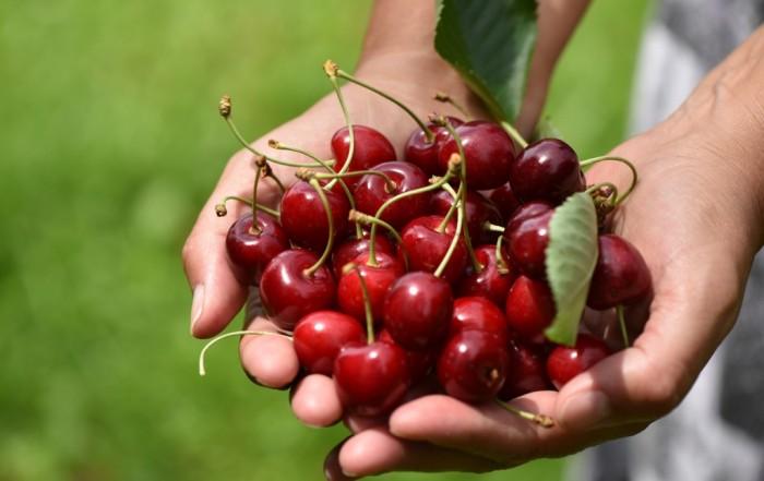 #autenticoitaliano, #forgourmetonly, #ratafià, #cherries, #Quaglia, #Pecetto